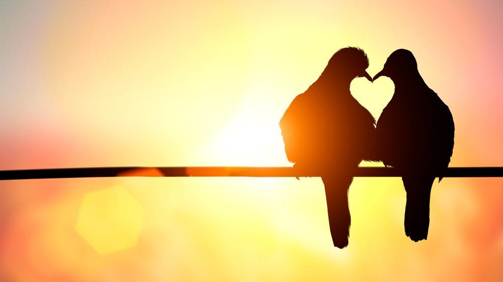 Steg online dating